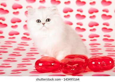 Silver Chinchilla Persian kitten on heart printed background with red plastic hearts