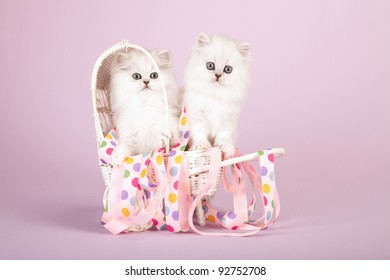 Silver Chinchilla Persian kittens in white wicker pram buggy on lavender background
