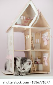 silver classic tabby male kitten playing in the dollhouse