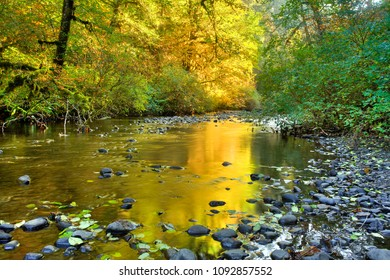 Silver Creek in silver falls state park, reflecting the golden autum colors, Oregon.