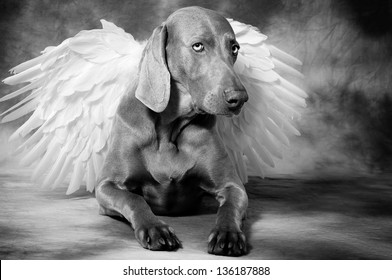 Silver dog with angel�´s wings