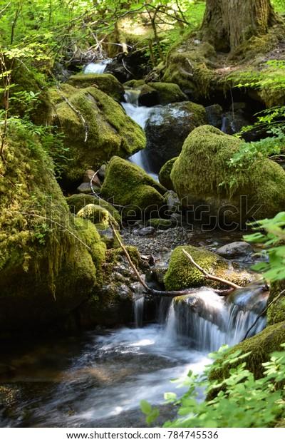 Silver Falls Hiking Trail, Randle, WA