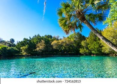 Silver Glen Springs Blue Water in FL