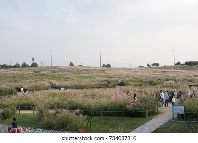 """silver grass Beautiful park """"sky park""""September 30, 2017 which was taken in the fall. """"sky park"""" is a park. The silver grass is quite beautiful. It is in Korea."""