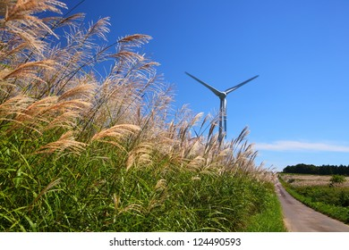 Silver grass with windmill and straight way