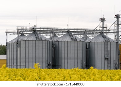 silver silos on agro manufacturing plant for processing drying cleaning and storage of agricultural products. Large iron barrels of grain. modern plant against the background of a large rape field
