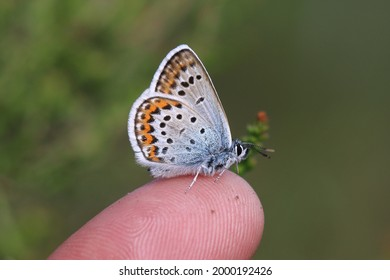 Silver studded blue on my finger