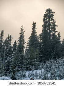 Silvery light shinning through the clouds in Mt Hood National Forest territory as the last hours of the day go. Snow covered trees in the foreground.
