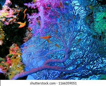 Similan Island Under Water Thailand