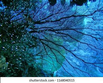 Similan Underwater the sea Thailand
