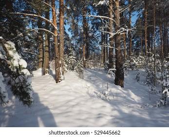 Simple beautiful winter landscape.