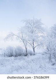 Simple beautiful winter landscape. It is a lot of snow and trees