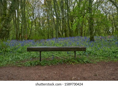 A simple Bench set on a Path amongst the Bluebells of Darroch Oak Woodland on a Wet May Afternoon.