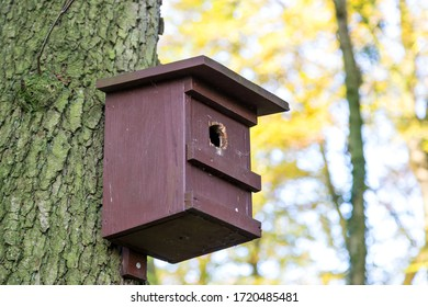 Simple birdhouse on a pine in the forest