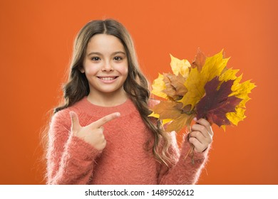 Simple bouquet. Collecting leaves. Natural treasures. Changes in nature. Cute happy smiling kid playing with leaves. Fall symbol. Happy little girl with maple leaves. Small child hold autumn leaves.