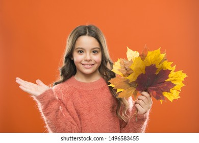 Simple bouquet. Collecting leaves. Natural treasures. Changes in nature. Happy little girl with maple leaves. Small child hold autumn leaves. Cute happy smiling kid playing with leaves. Fall symbol.