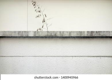 Simple concrete fence and plant landscape