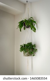 "A simple cotton macrame is holding two plastic plant pots with plants in them. The top plant is a ""Staghorn Fern"", the bottom is a ""Wandering Jew""."