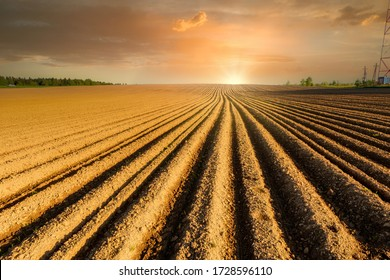 Simple country landscape with plowed fields and blue skies. Furrows row pattern in a plowed land prepared for planting potatoes crops in spring.