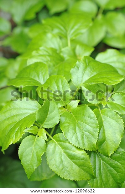 simple and effective image of young green leaves