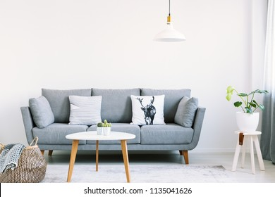 Simple interior of a bright living room with white pillows on a gray sofa next to a stool with a monstera plant on it. Real photo