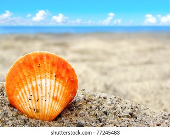 Simple orange sea shell in the beautiful sand of a tropical beach with room for your text, perfect for vacations and travel background