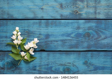 Simple spring border with two flowering jasmine twigs on blue wooden background - text space