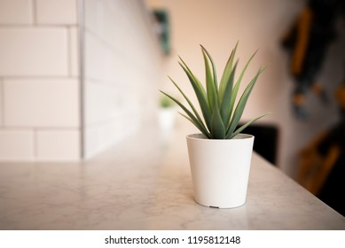 Simple succulent plant in a small white pot in a hipster minimalistic coffee shop