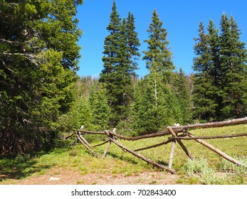 A simple tree fence nestled among evergreen trees in  Rocky Mountain National Park in Colorado.  Overhead is a clear blue sky.  The photo was taken in summer.