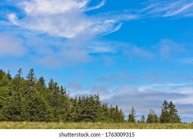Simple view of treeline against a clear blue sky with wispy clouds on a summer day