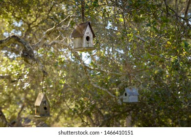 Simple wooden bird boxes hanging from branches of a tree.