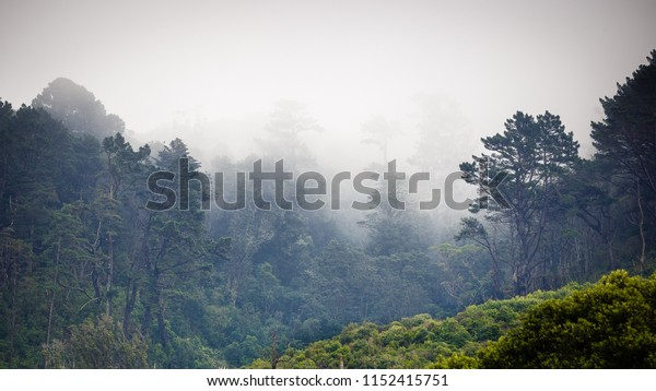 Simplistic landscape of trees emerging from a misty fog on a cool winter morning