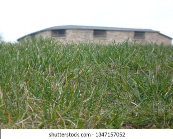 A simplistic photo of some grass with a small bit of the Kalmar castle appearing behind it.
