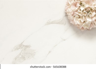 Simply elegant minimalism with one hydrangea blossom framing open white marble space for copy.
