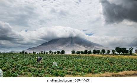 SINABUNG VOLCANO, SUMATRA, INDONESIA - September 28, 2016: Unidentified woman farmer ignores the volcano eruption and continues her work. Eruptions of Sinabung killed several people in recent years,