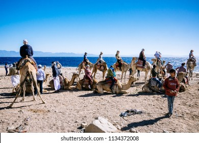 SINAI, EGYPT - JANUARY 16, 2018: Tourist ride on camels on the shore of the Gulf of Aqaba near Blue Hole.