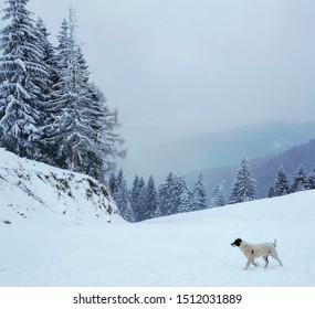 Sinaia Romania, elevation 1400 m