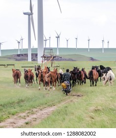 Since the horses of farmers in Inner Mongolia have huge areas where they can move around it is very difficult to control them. Thus the farmers there use a motorbike to move the horses.