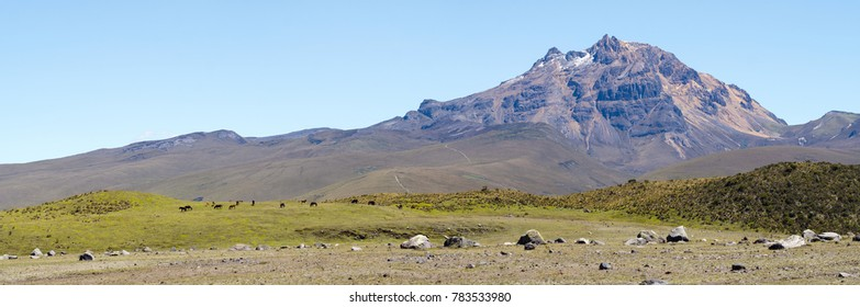 Sincholagua Volcano (4,899m) in the Ecuadorian Andes Situated south of Quito in Cotopaxi National Park. With a herd of wild horses in foreground.