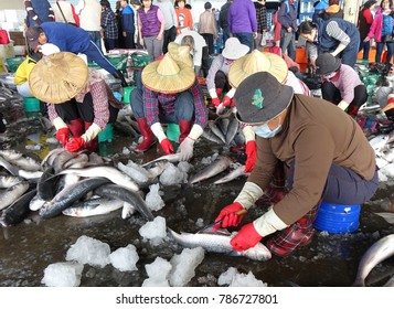 SINDA PORT, TAIWAN -- DECEMBER 31, 2017: Workers extract mullet roes from freshly caught gray mullet fish. The roe will be pressed and salted and sold as a highly priced delicacy.
