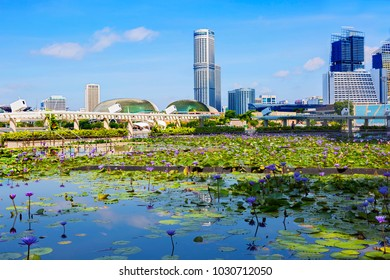 Singapore, 01/21/2018, Lotuses on Marina Bay Sands. The Singapore Museum of science and art is surrounded by a pond with live lotuses and fish. City views can be enjoyed from here.