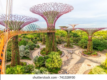Singapore, 09 August 2017 - The Supertrees At Gardens By The Bay In Singapore