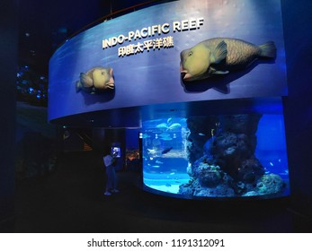 SINGAPORE - 09 SEP 2018: People watching big aquarium in S.E.A Aquarium; Singapore. S.E.A. Aquarium is among the largest aquariums in the world