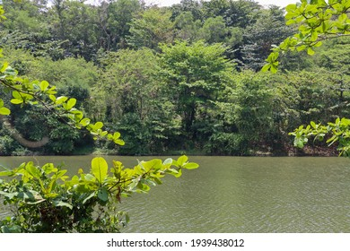 SINGAPORE - 18 MAR 2021. The Serangoon Reservoir at 1 pm, adjacent to the Punggol Promenade Riverside Walk is clean  green and relaxing in the hot afternoon.