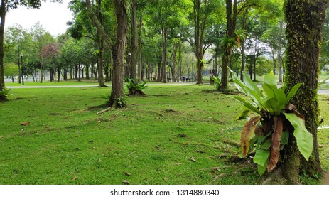 SINGAPORE- 27 JAN, 2019: Panorama view green and clean lakeside park. Punggol Park in Singapore