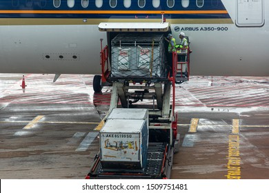Singapore - 29 June 2019: A ULD loader lifting a unit load device (ULD) with living Zebras  to an aircraft's cargo bay of a Singapore Airlines machine at the Singapore International Airport
