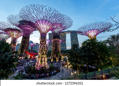 Singapore 9 December 2015 ,Supertree in gardens by the bay and marina bay background in the night