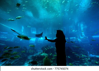 SINGAPORE - AUG 3: Woman Silhouette with aquarium tank background at S.E.A. Aquarium on the August 3, 2016 in Singapore