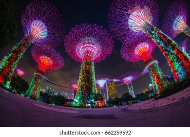 Singapore - August 01, 2016: Colorful of lighting show in Singapore, Cityscape on twilight scene. Lighting illuminated Supertree Grove at Gardens by the Bay in Singapore.