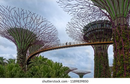 "Singapore, Singapore- August 07, 2018: The ""OCBC Skyway"" trail passes at a height between two super-trees. On the trail are tourists"
